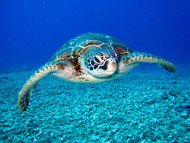 The Harmful Effects Plastic Pollution Has on Endangered Sea Turtles