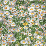 Wildflowers | Sentimental Studios | Moda Fabrics | 0.9m Remnant