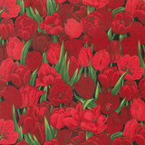 Tulips | Nutex UK Limited | 89160 104 | Red Tulips