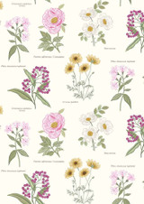 Botanic Garden | Lewis and Irene |A453.1 Botanic Flowers on Cream
