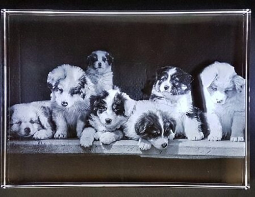 Puppies in 2D photo Frame