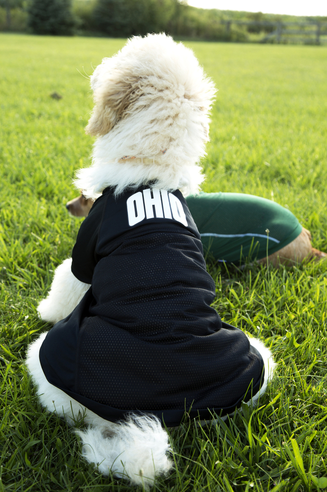 ARCH OHIO DOG FOOTBALL JERSEY