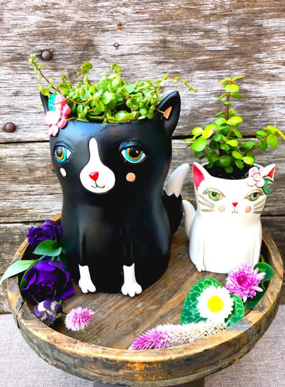 cat planer succulents