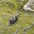 Silver Connemara Marble Tree O'Life Pendant S46026