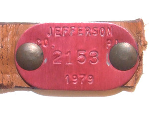 1979 Red Anodized Aluminum Dog License Tag #2153 - Jefferson County, PA