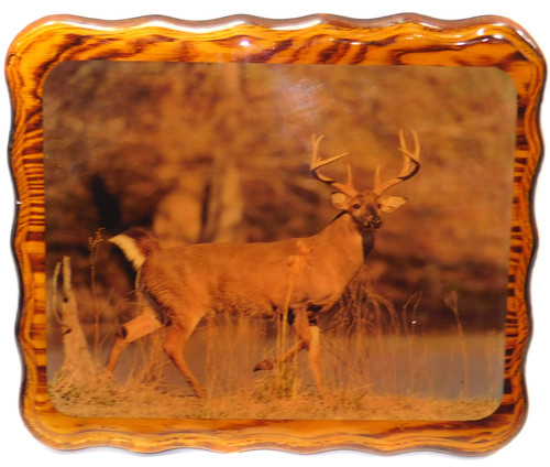 Vintage Retro Shellacked Wood Plaque with Whitetail Buck Deer Photograph