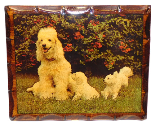 Vintage Retro Shellacked Wood Plaque with Poodle & Puppies Photograph