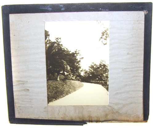 Tropical Road or Canal Photo With Palm Trees Magic Lantern Slide