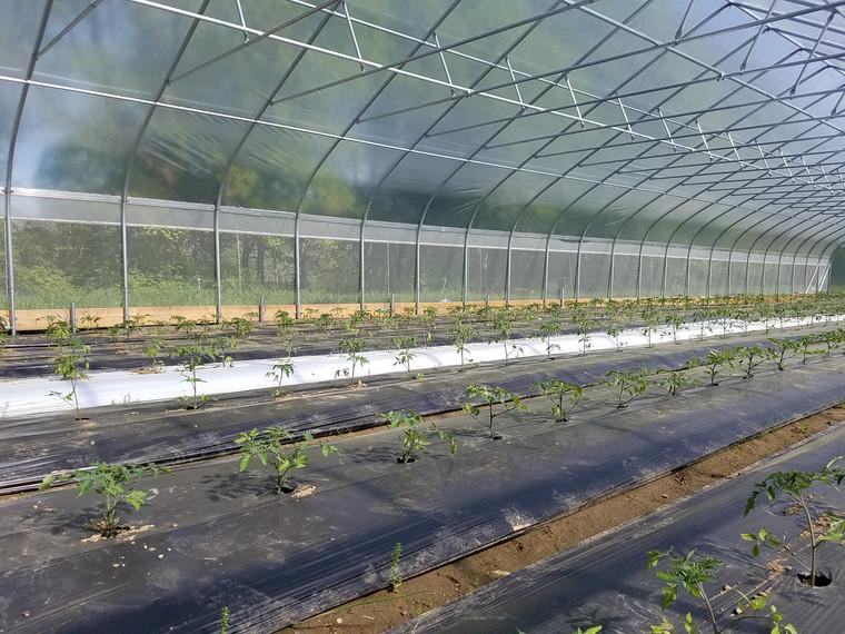 Grower Plus Series High Tunnel: 72 Feet Long