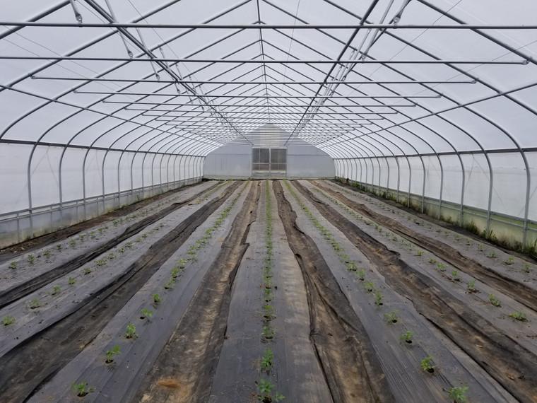 Grower Series High Tunnel: 72 Feet Long