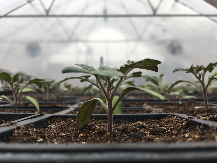 Grower Plus Series Greenhouse: 72 Feet Long