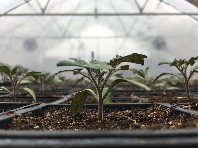 Grower Series Greenhouse: 48 Feet Long