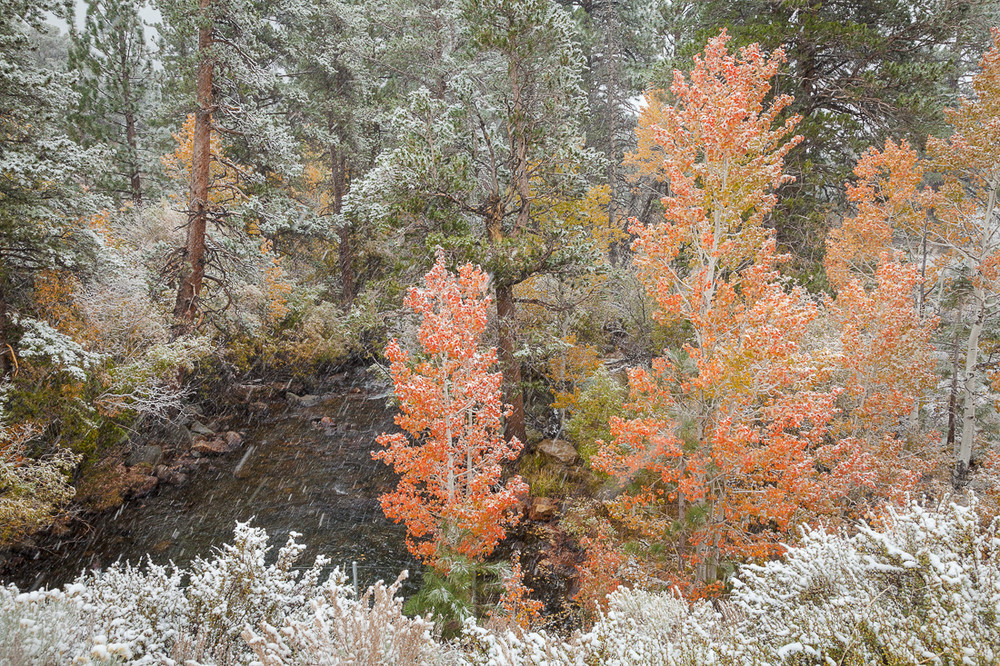 Autumn and Snow, Lee Vining Canyon