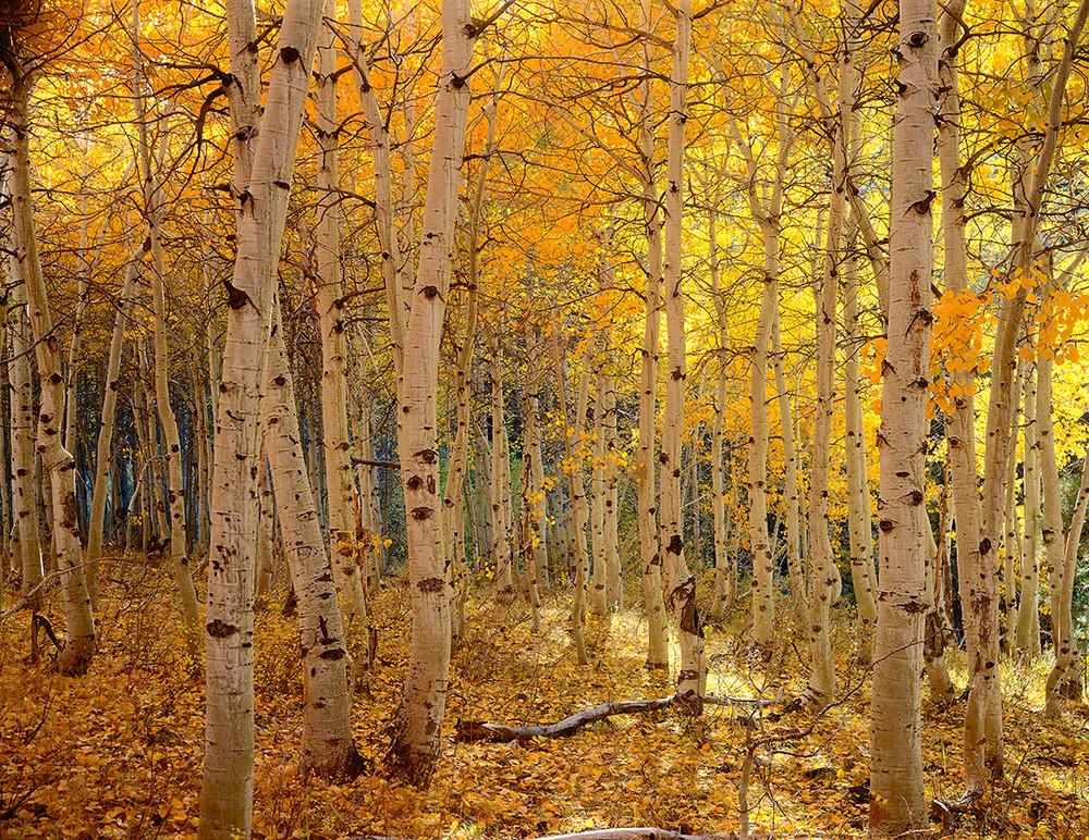 Aspendell Fall Colors