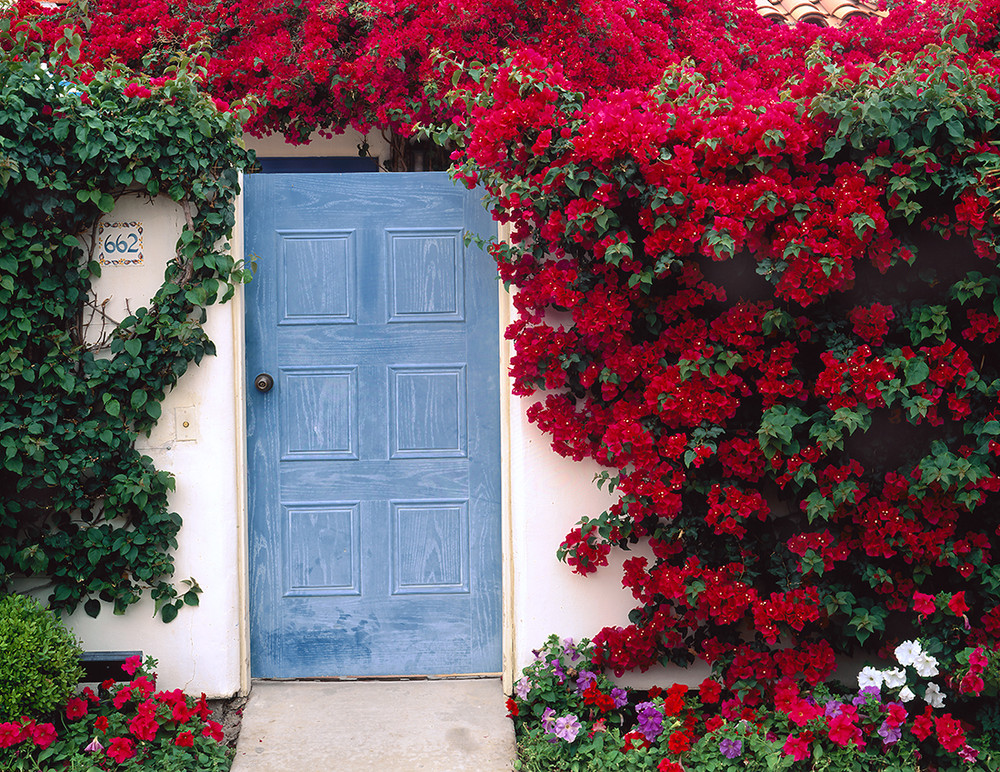 Bougainvillea and Blue Door