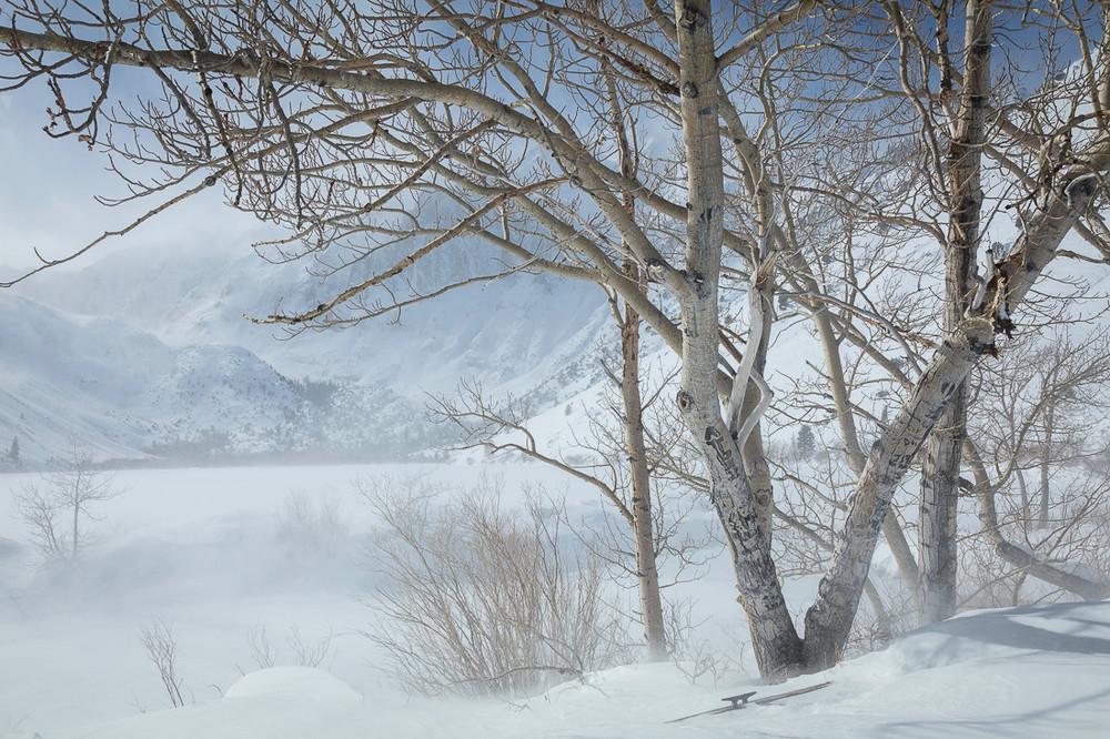Winter Aspens at Convict Lake