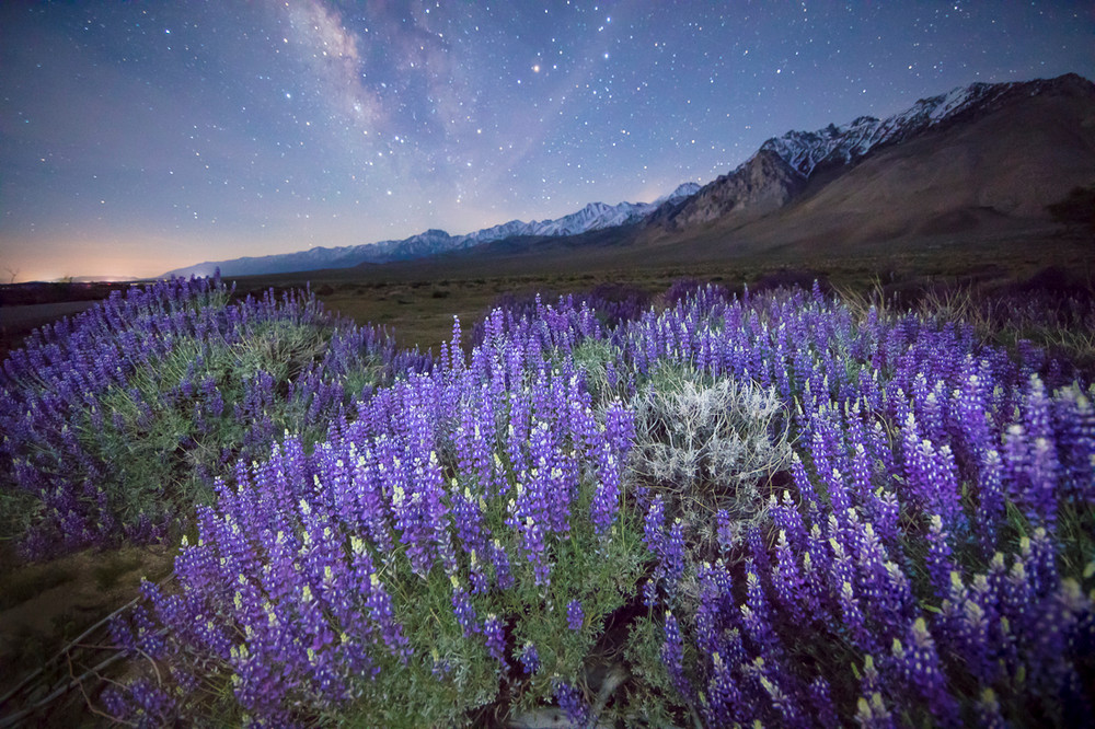 Lupine and the Milky Way