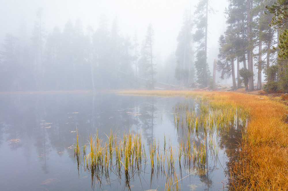 Foggy Afternoon, Autumn at Siesta Lake
