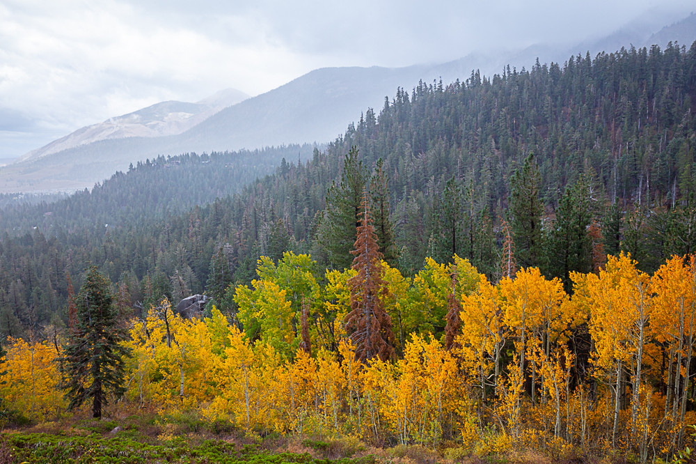 Autumn Storm in Mammoth