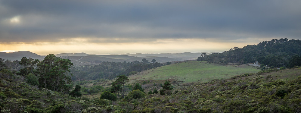 Pierce Point Road and Fog