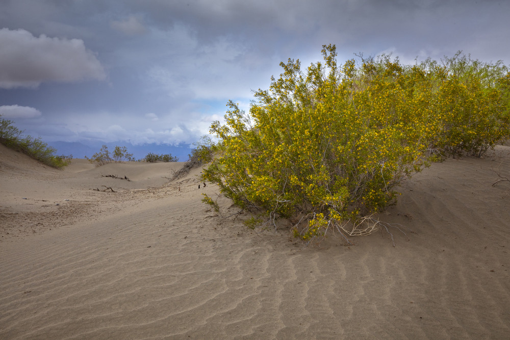 A Stormy Afternoon at the Mesquite Dunes