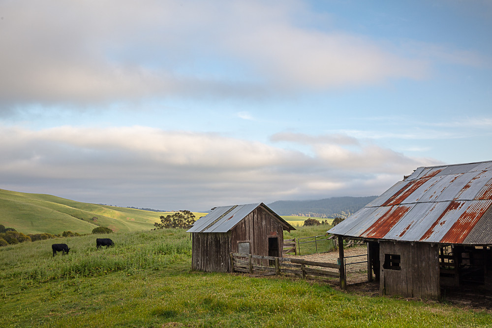 Spring in the Point Reyes Hillsides
