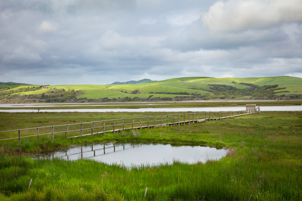 A Contemplative Tomales Bay