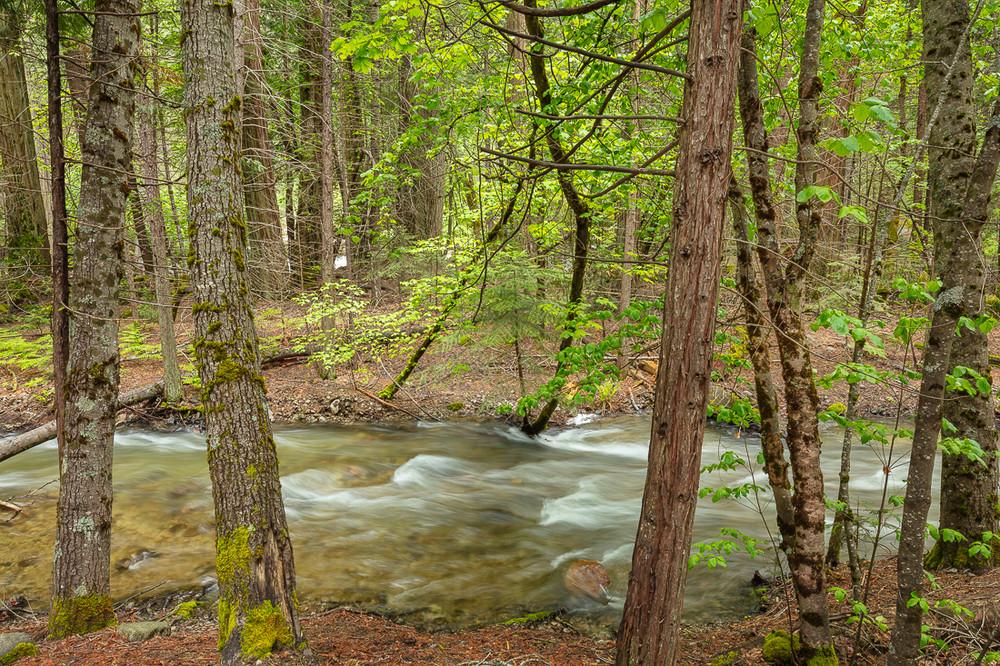 Tenaya Creek in Yosemite