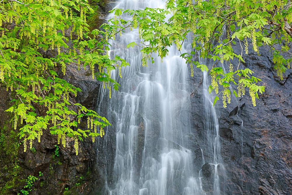 Spring at Bridalveil Falls