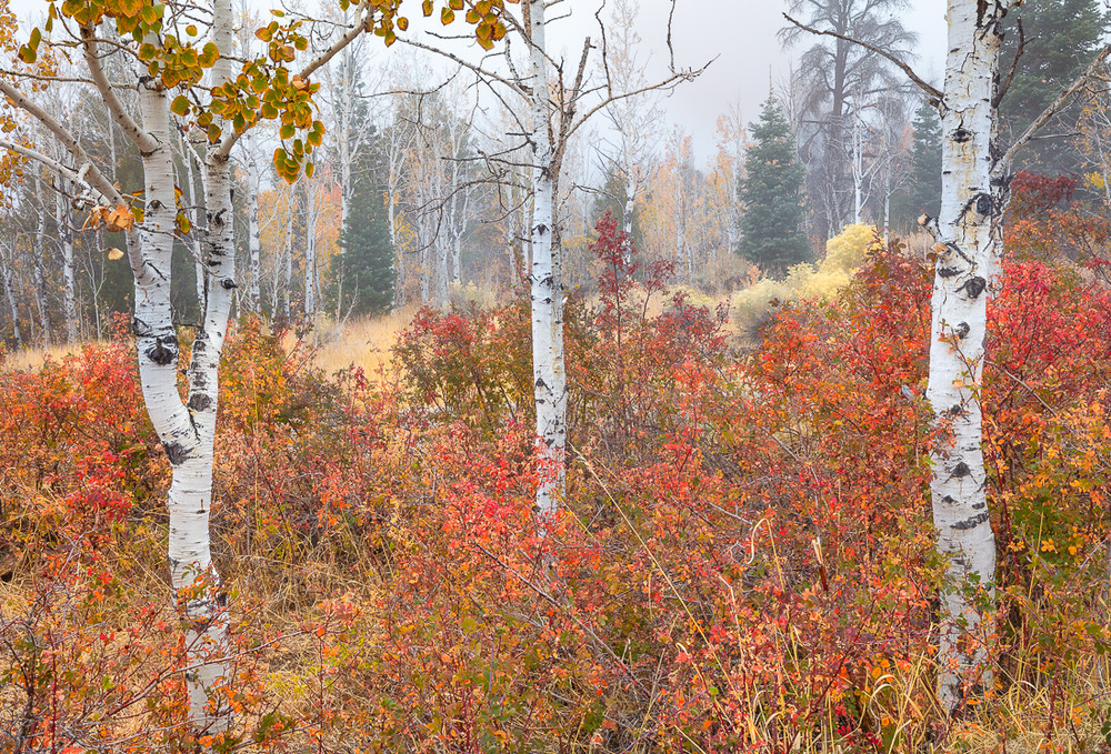 The Ebbing of Autumn Colors