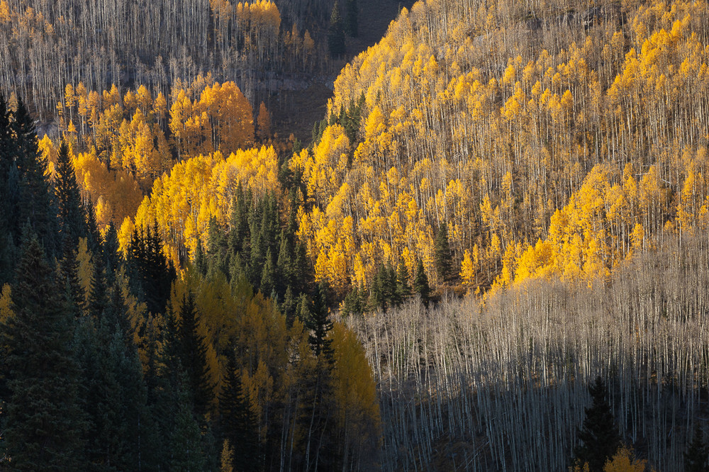 Aspen along Molas Pass