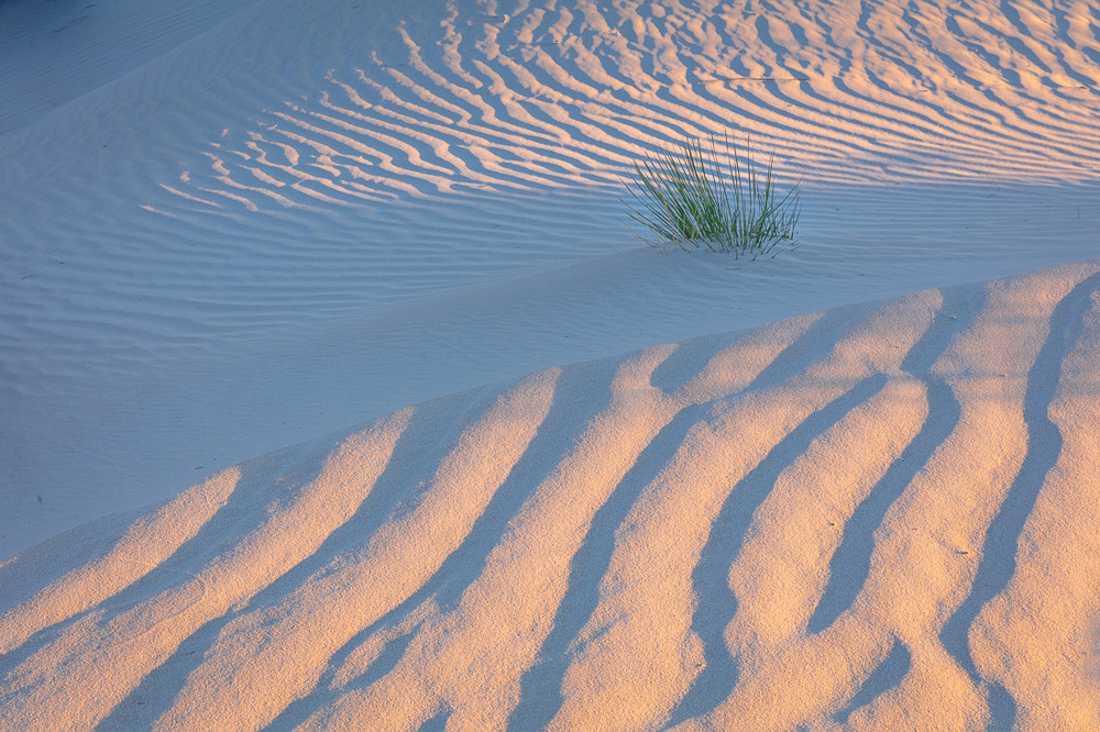 The Dunes of Guadalupe NP