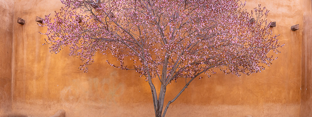 Spring Bloom - Santa FE
