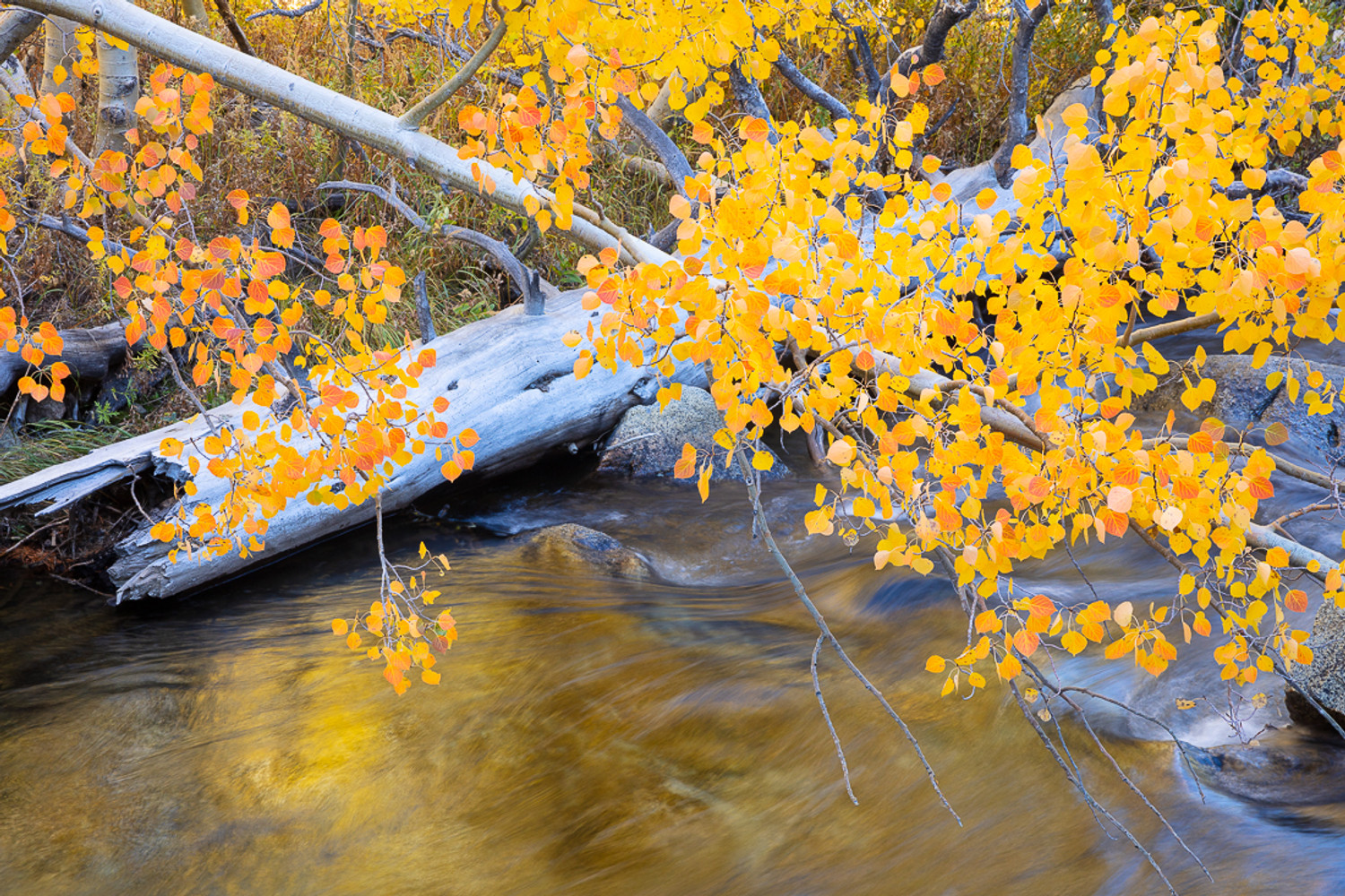 The Magic of Autumn is Coming Now to the Eastern Sierra