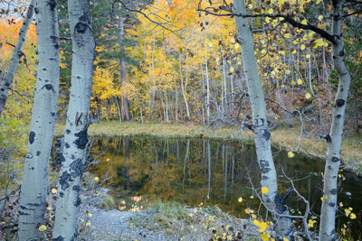 Early Autumn below Lake Sabrina