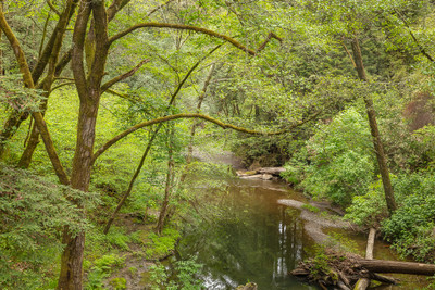 Lagunitas Creek, Marin County