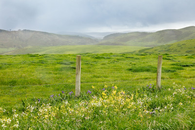 Wistful Pastures to the Pacific Ocean