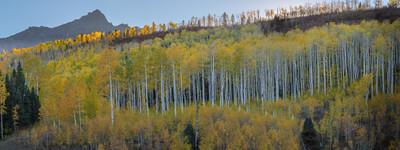 Classic Aspens of Colorado