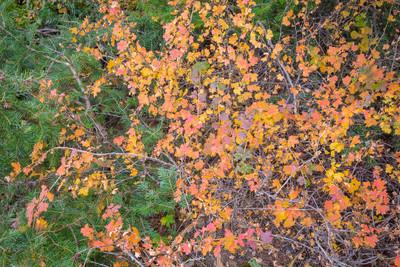 Closeup of Autumn Colors