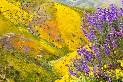 California Superbloom of 2019