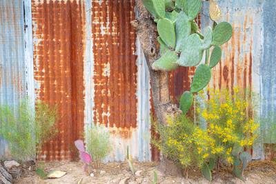 Las Puertas del Histrorico Tucson #7