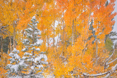 October Autumn 2