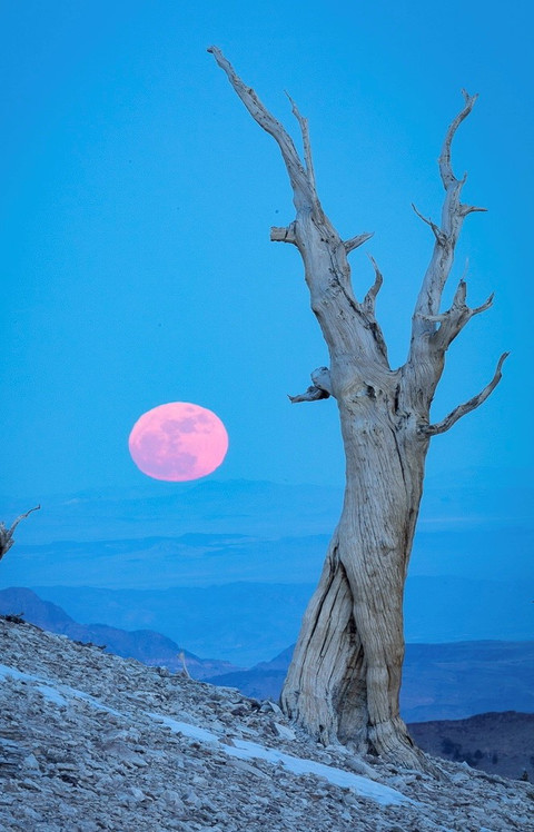SuperMoon, New Years Day,       the White Mountains