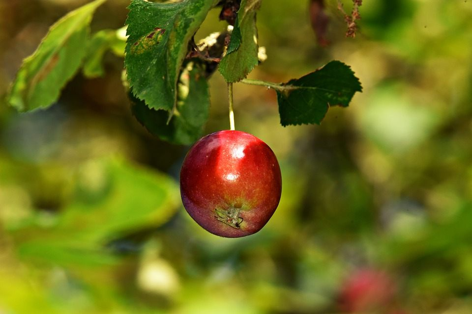 Grow and protect your fruit