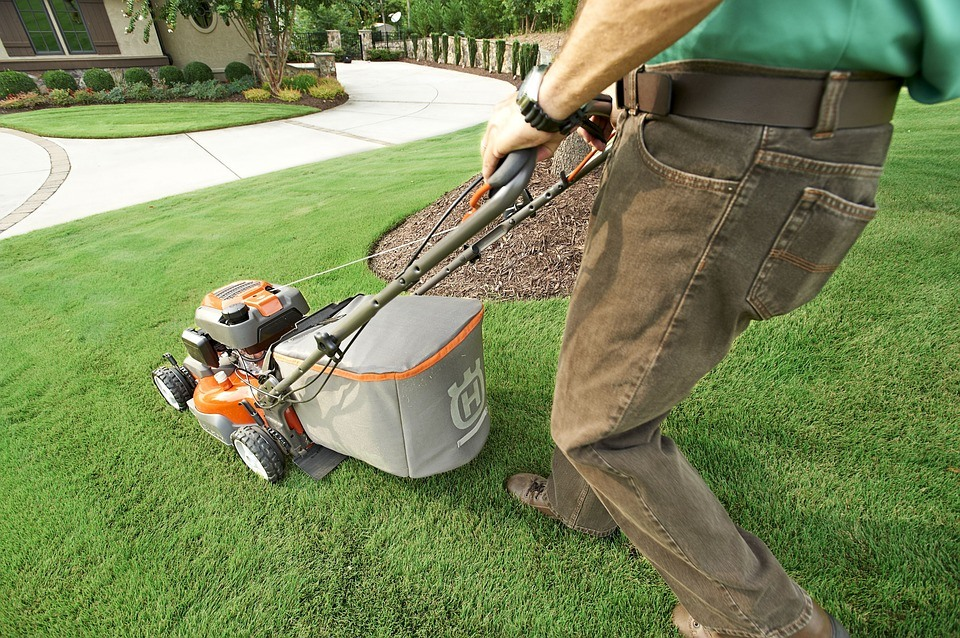 Look after your lawn