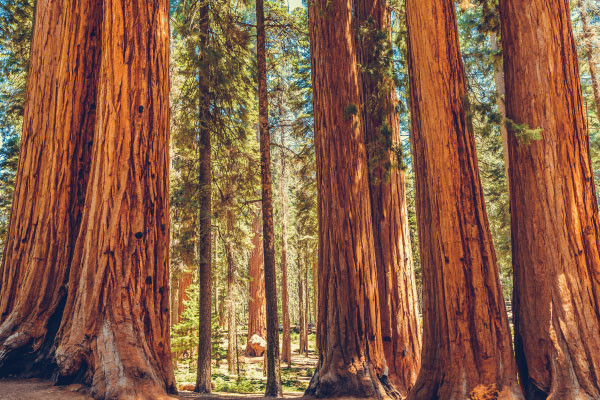 Insider's Guide to Redwood National Park