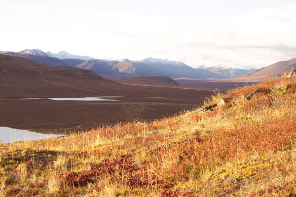 Insider's Guide to Gates of the Arctic National Park