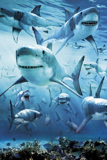 Image for Shark Infested Poster