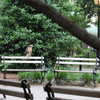 Hawk resting on a bench