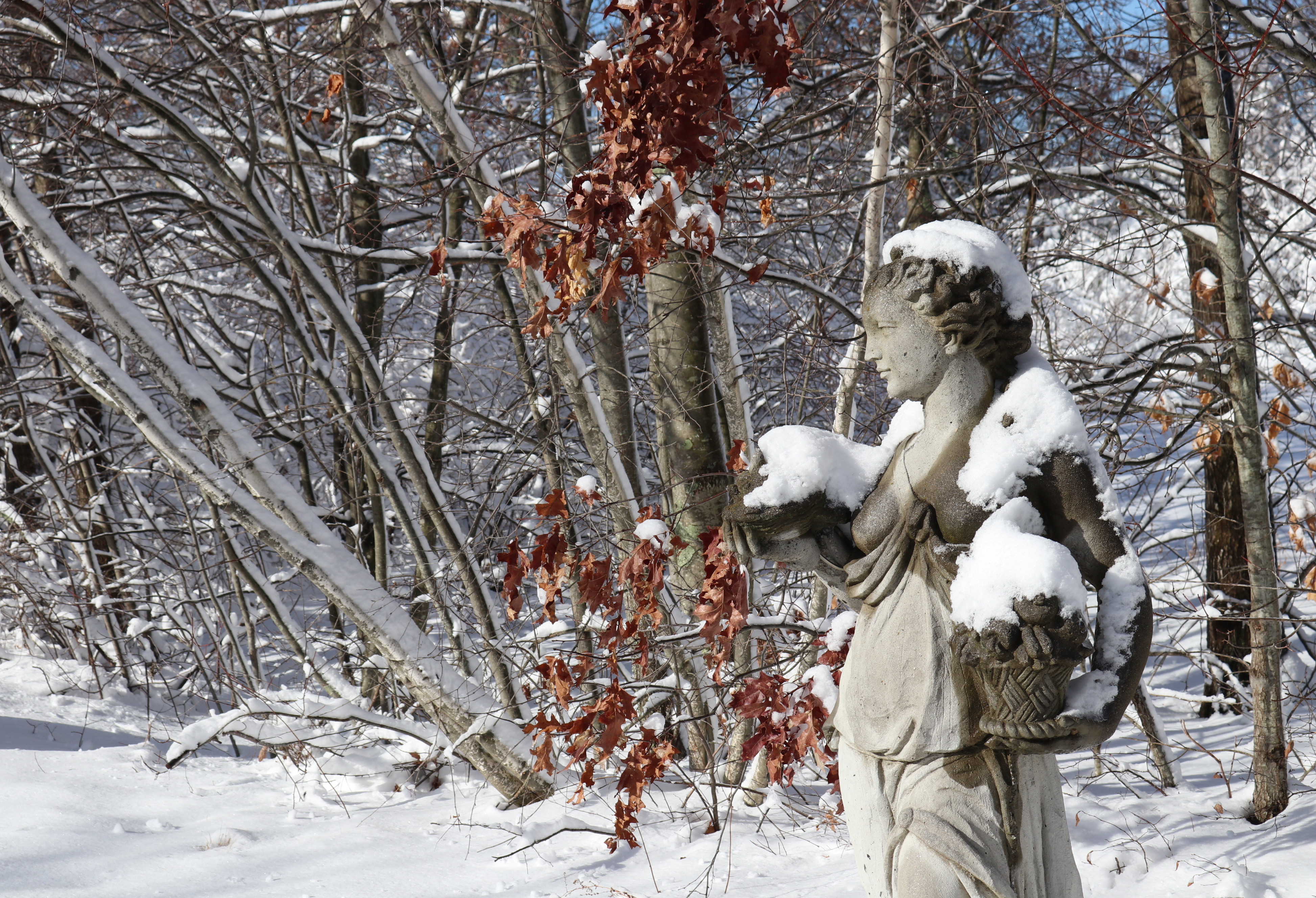 5 Ways To Beautify Your Garden For Winter